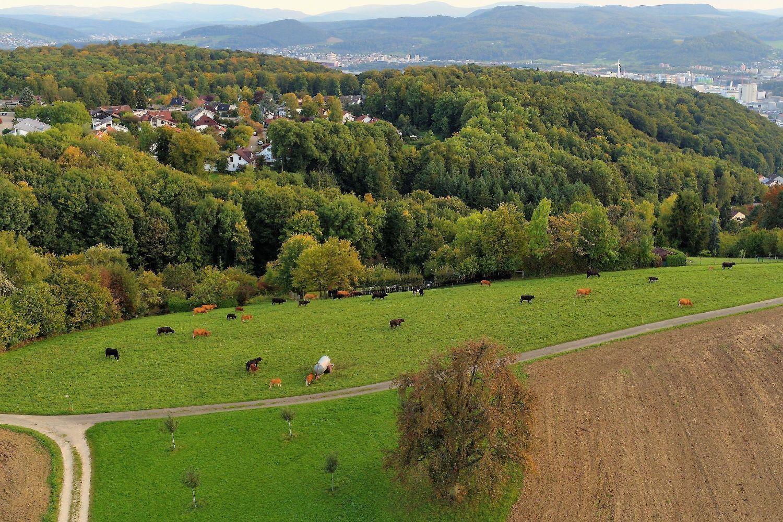 Basler_Alp