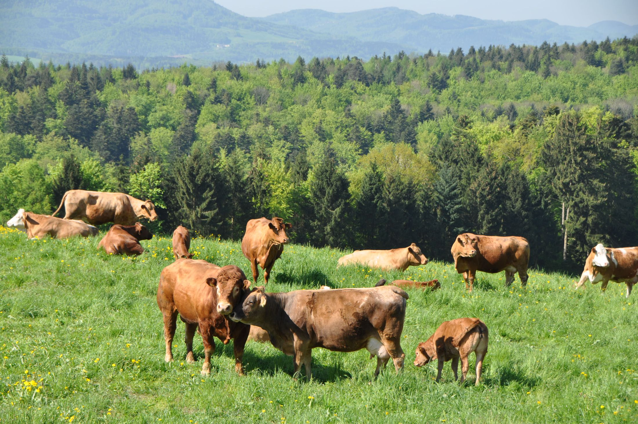 Natura-Beef