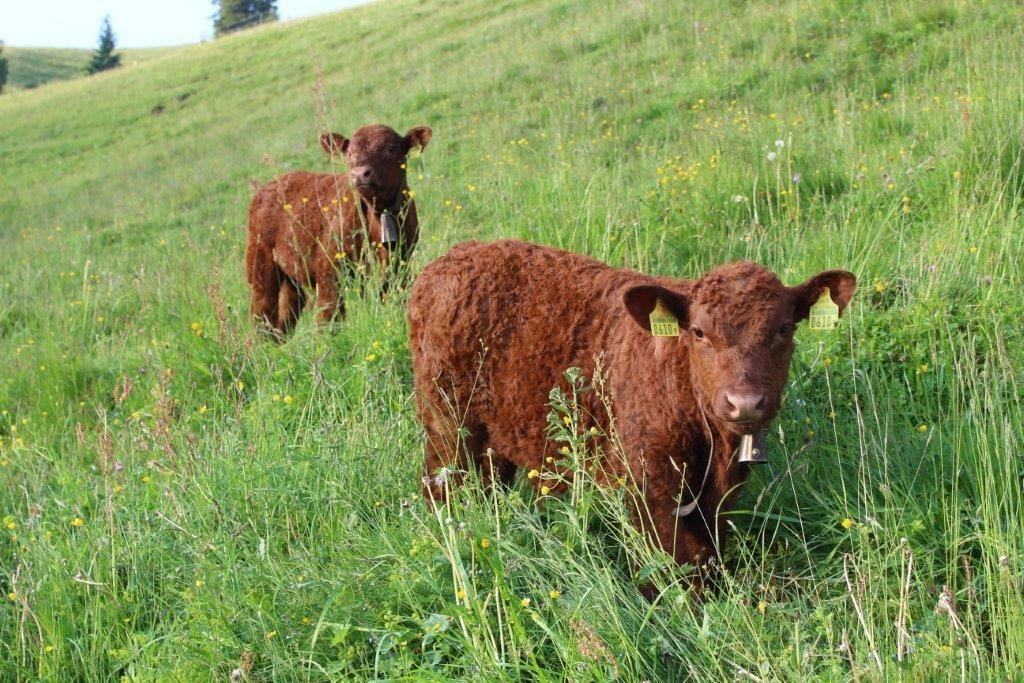 Luing lors de la beef.ch au Diemtigtal